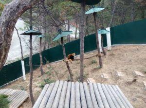 малая панда зоопарк Далянь